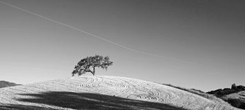 California Valley Oak Tree in plowed fields in Paso Robles wine country in Central California USA - black and white. California Valley Oak Tree in plowed fields Stock Photos