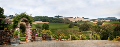 California vineyard. View at at Sonoma valley with rows of grapes from California winery Stock Image