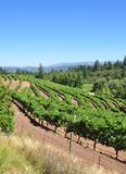 California vineyard Royalty Free Stock Image