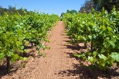 California Vineyard Stock Images