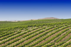California vineyard Stock Photo