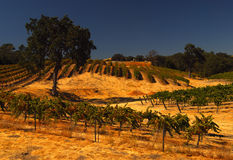 California vineyard. Rolling hills and California vineyards in fall stock photos