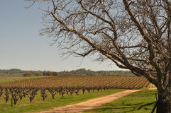 California Vineyard on a Blue Sky Day stock images