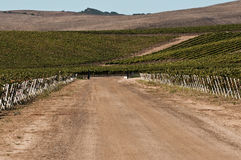 California Vineyard Road Harvest Time Royalty Free Stock Images