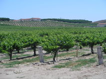 California vineyard Stock Photos