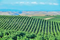 California Vineyards, Wine Country Royalty Free Stock Image