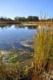 California Wetlands Stock Image