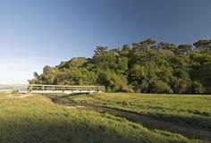 California wetlands. Tomales bay state park, California royalty free stock photos