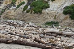 Trees washed ashore after the Montecito mudslides of 2018, 2. The California wide fire season of 2017 had been one of the worst, up still that point. With the royalty free stock photography