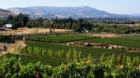 California Wine Country. Photo of vinyards in the Wine Country of California north of San Francisco Stock Photography