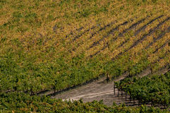 California Wine Country Royalty Free Stock Photos