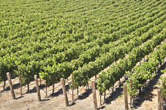 California Wine Country Royalty Free Stock Photo