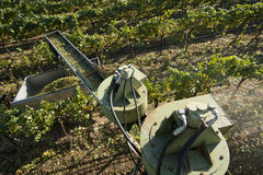 California wine grape harvest Stock Images