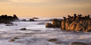 Californian Coastal Scene. Sea gulls sit in a line on rocks warmed by the evening glow of a setting sun. Pacific Oscean waves break in white surf on the rocks. A royalty free stock photo