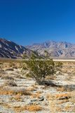 Californian desert Royalty Free Stock Photography