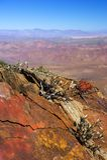 Californian desert Royalty Free Stock Photo