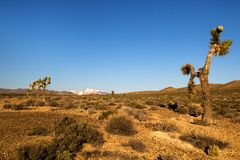 Desert landscape with bush, shrubs and cactuses, view of the snowy mountain on the back, cactus tree in front of dry wild land royalty free stock photo