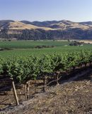 Californian Vineyard Royalty Free Stock Images