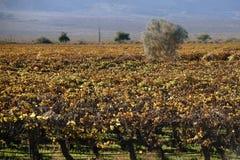 Californian wine Stock Photos