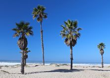CaliforniaPalm trees beach Royalty Free Stock Photo