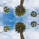 Californische palm tegen blauwe hemel in Beverley Hills in Los Angeles royalty-vrije stock afbeelding