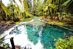 Californische sequoia's en reservoirs royalty-vrije stock foto's