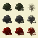 Californische sequoiaboom het 3d teruggeven voor landschapsontwerper geïsoleerd Royalty-vrije Stock Afbeelding