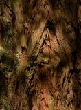 Californische sequoiabos - close-up van schors royalty-vrije stock fotografie