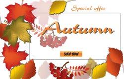 Caligrafía del otoño Letras estacionales Plantilla de la bandera del web Ilustración del vector Fotos de archivo