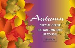 Caligrafía del otoño Letras estacionales Plantilla de la bandera del web Ilustración del vector Imagen de archivo libre de regalías