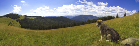 Call of ancestry. A panoramic view over the mountain landscape with a dog sitting in a grass in the foreground. Carpathians, Ukraine. Panorama royalty free stock image
