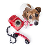 Call center> Dog phone Royalty Free Stock Photos