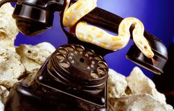 Call me. Snake on the old phone Royalty Free Stock Image