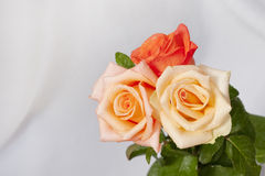 Call of roses Royalty Free Stock Photo