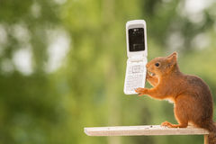 Call too nuts. Female red squirrel standing with  telephone