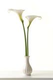 2 calla белизны в белой вазе Стоковые Изображения