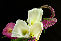 Calla. Beautiful bouquet of colorful calla lilies on a black background Stock Photography