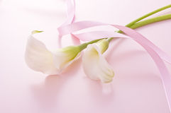 Calla. And ribbon on pink background Royalty Free Stock Image
