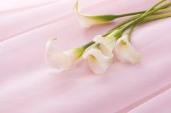 Calla. White calla on pink chiffon cloth Royalty Free Stock Photos