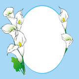 Calla background frame. Blue background with frame and calla flowers illustration Royalty Free Stock Images