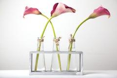 Calla bloemen in vazen. Stock Afbeeldingen