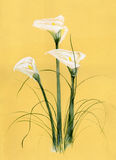 Calla bouquet. On yellow background. Painting Royalty Free Stock Photos