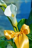 Calla bow Stock Photos