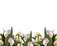 Calla de Grens van Lelies Stock Foto