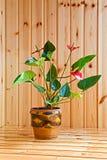 Calla flower Stock Image