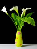 Calla flowers Stock Photography