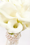 Calla flowers Royalty Free Stock Photo