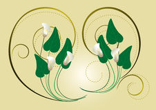 Calla flowers with the decor of spirals on a light background Royalty Free Stock Photography