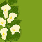 Green background with calla vector illustration