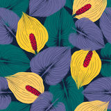 Calla flowers seamless pattern. Royalty Free Stock Images